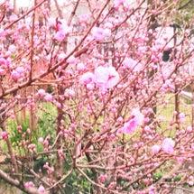 「春」を意味する英語…