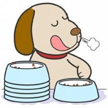 犬の胆泥症や胆石は炭…