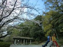 宝来公園の桜3