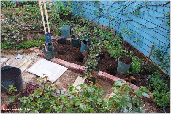 バラの植え込み 花壇