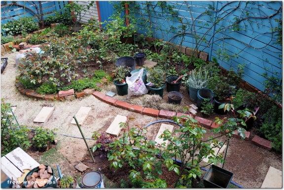 バラの庭 アプローチ 芝生