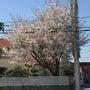 春、イメチェン