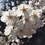 桜の季節に…☆