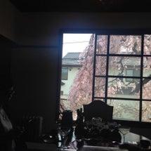 桜と中国茶
