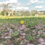 黄色い花とハナビラ