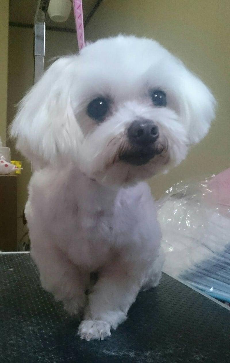 小型 犬 里親 募集 「小型犬 × 高齢者応募可」犬の里親募集情報 ::...