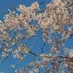 そうだ京都に行こう#春はあけぼの・JU東海