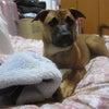 子犬と仔犬の画像