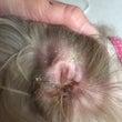 耳と顔のアチコチ