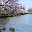 お花見 桜編