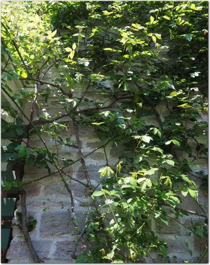 国立市 バラの庭