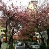 ピンクの力★プチカラーセラピープレゼントの画像