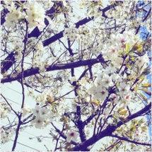 42 ~ 再出発の春…