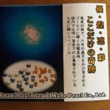 奄美大島の「金真珠」