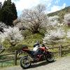 奈良県最古の1000年桜お花見ツーリングの画像