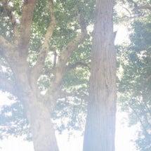 白い森の光~自分に従…