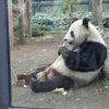 動物園でアニコミ♪第三回の画像