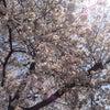 アニバースFinalありがとう!と、5/14(日)ライブ出演のお知らせ✩︎⡱の画像