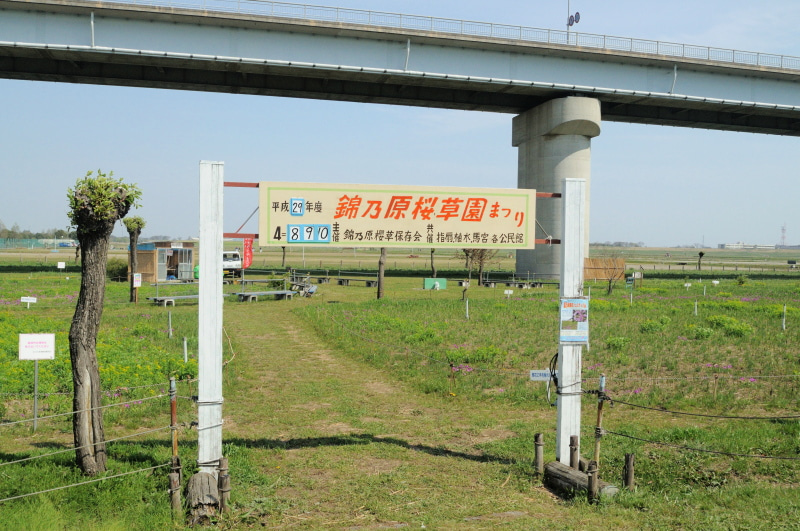錦乃原桜草園002