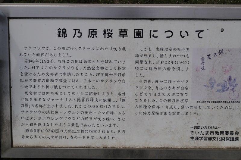 錦乃原桜草園014