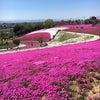 * 芝桜を見に太田への画像