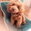 募集「愛犬と楽しく暮…