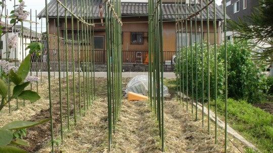 夏果菜苗の植え付け | 墨俣菜園日記