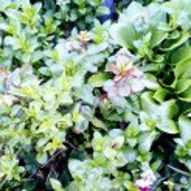 新緑の季節と近況