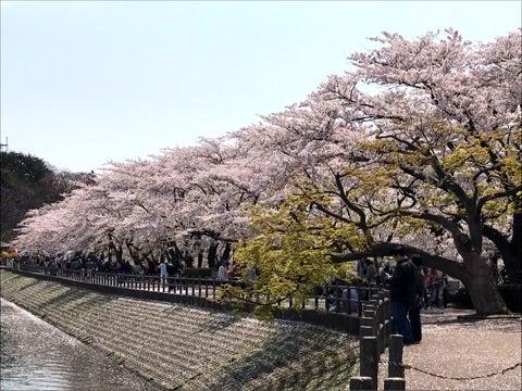 高松公園の桜 | 気象予報士 大隅智子の明日天気になあれ