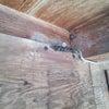 ∵ 燕の巣の画像