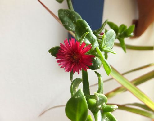2017-flor en sunroom