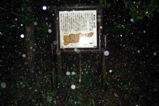 【写5】蒲生城