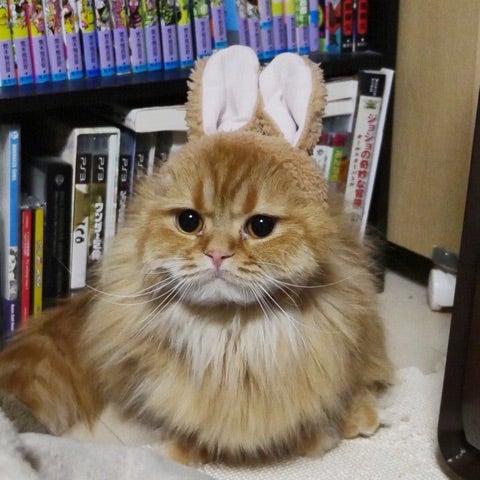 うさぎさん?猫さん?