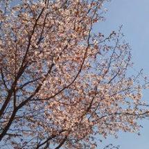 北国にも春ーーー!!