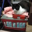 京急の番猫