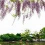 鎌倉散歩へ♪