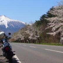 今日は桜を探しにフラ…