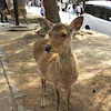 【奈良】奈良市:東大寺の画像