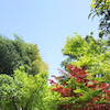 【京都】京都市:高台寺の画像