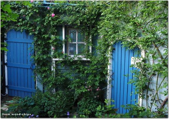 バラの庭 窓