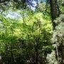 新緑エネルギーの奈良…