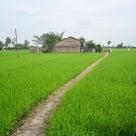 8月16日~22日 夏はのんびり&エキゾチックなリトリート@ベトナムの古都ホイアンの記事より