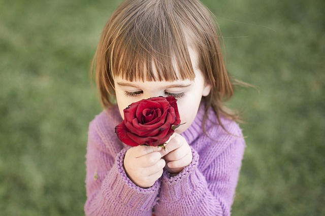 rose-1963807_640.jpg