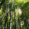 鎌倉で癒されるの画像