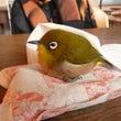 愛鳥週間(各紙)