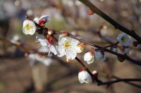 いく重にも 「心の花」2013年5月号掲載作品 | わたる風よりにほふマルボロ