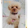 愛犬の日♡ブサイク?でもかわいい我が家のアイドル◆KiyoのDiaryの画像