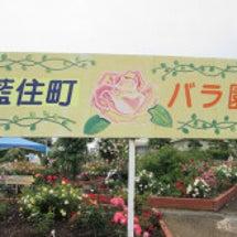 ☆藍住町バラ園☆