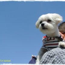 今日は愛犬の日