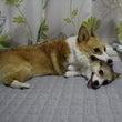 今日は愛犬の日・・ら…
